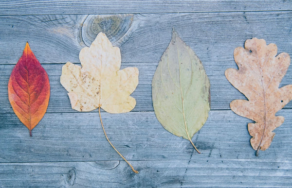 four dried leaves of different shapes and colors displayed to symbolizing the importance of being authentic as part of K-beauty influenced holistic skincare habit and rituals
