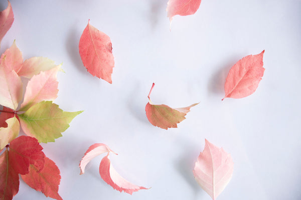 red and pink fallen leaves blowing in the wind symbolizing the importance of letting go at the right time as part of K-beauty influenced holistic skincare habits and rituals