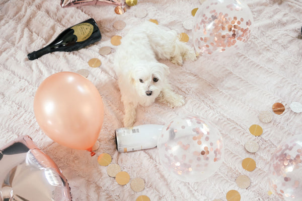 small white dog next to wine bottles and party decorations symbolizing the bad effects of wine on skin as part of K-beauty influenced holistic skincare tips