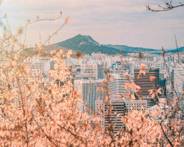 Bird's eye view of Seoul, the capital of skincare and K-beauty, with cherry blossoms Namsan mountain and high rise buildings