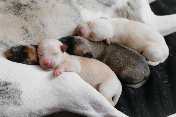 new born puppies sleeping in various positions showing different sleep positions can impact the quality of your skin as part of K-beauty influenced holistic skincare habits and rituals