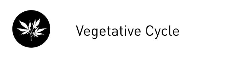 Vegetative Cycle