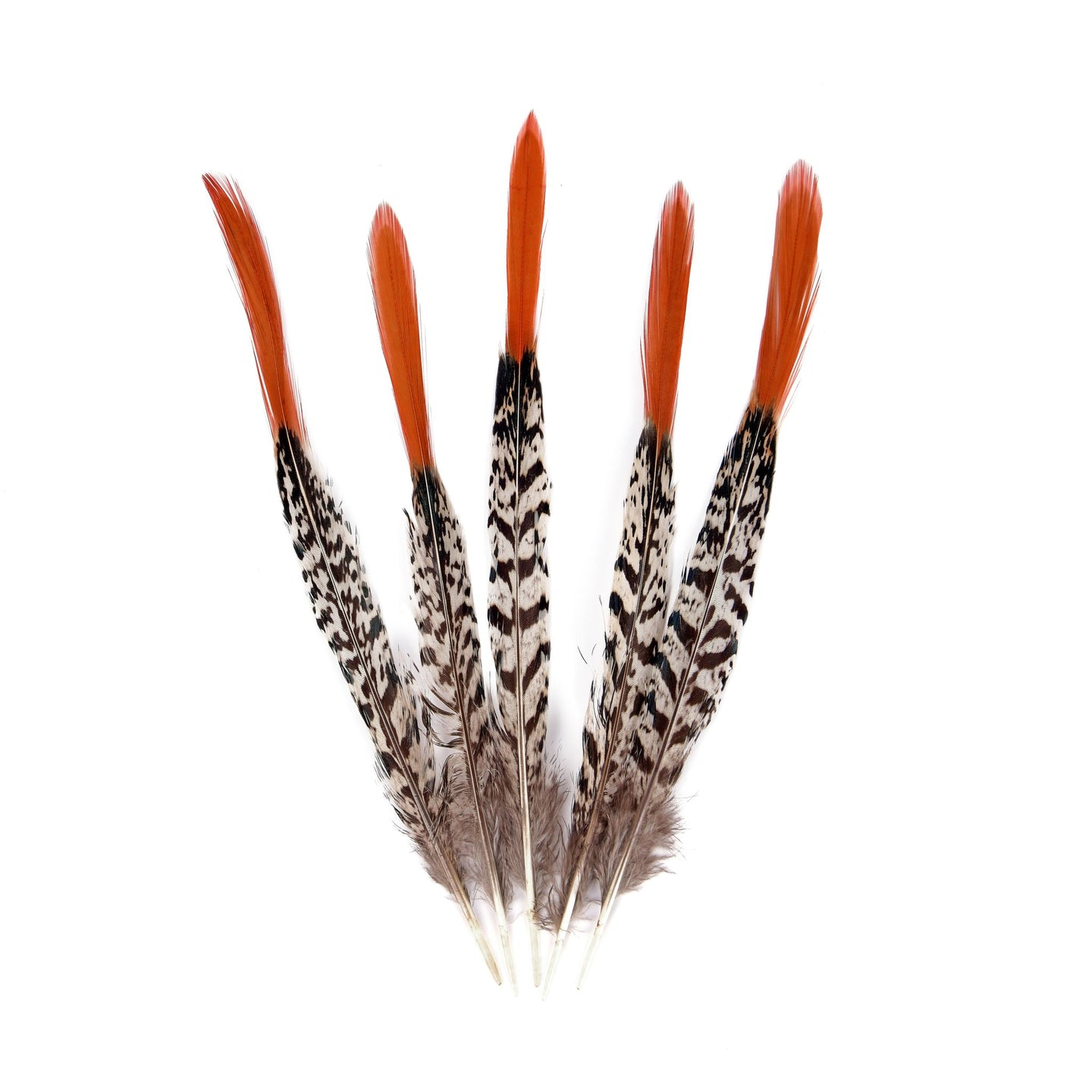 Burnt Orange Tip Pheasant Feather for Hats Fascinators and Millinery FE006