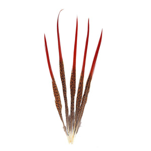 Red Tip Pheasant Feather for Hats Fascinators and Millinery FE007