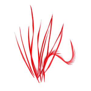 10 Single Spiky Goose Biot Feathers for Hats Fascinators and Millinery FR902