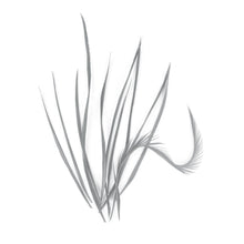 Load image into Gallery viewer, 10 Loose Spiky Goose Biot Feathers for Hats Fascinators and Millinery FR913