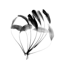 Load image into Gallery viewer, Stripped Coq Feathers, 10pcs X 15cm for Hats Fascinators and Millinery CO901