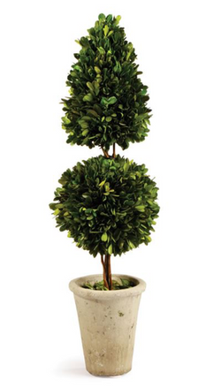 Boxwood Cone and Ball Topiary