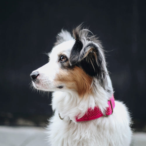 Rella Martingale Collar