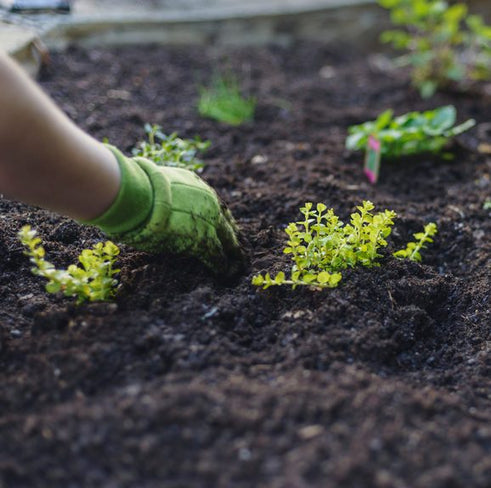 Garden to Table | How to Grow Healthy Soil