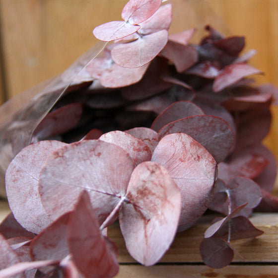 Dried Red Eucalyptus