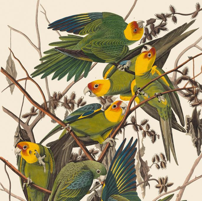 Audubon - All Edges Gilt Ed.