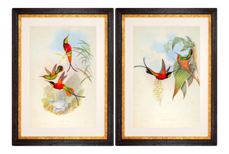 John Gould Framed Prints, (Plates 66 & 67 Hill House Ed.)