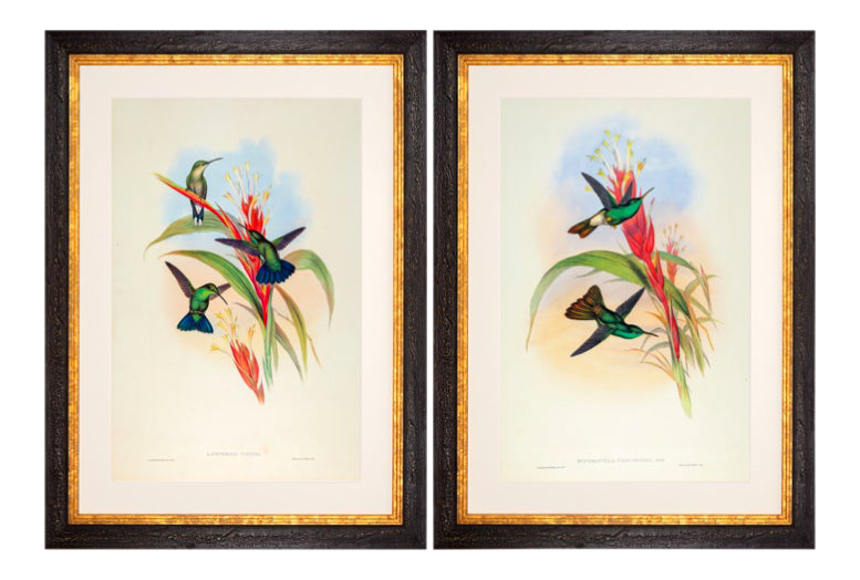 John Gould Framed Prints, (Plates 78 & 90 Hill House Ed.)