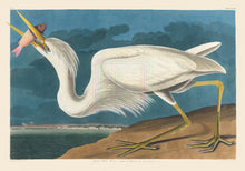 Load image into Gallery viewer, John James Audubon Museum Edition, Great White Heron