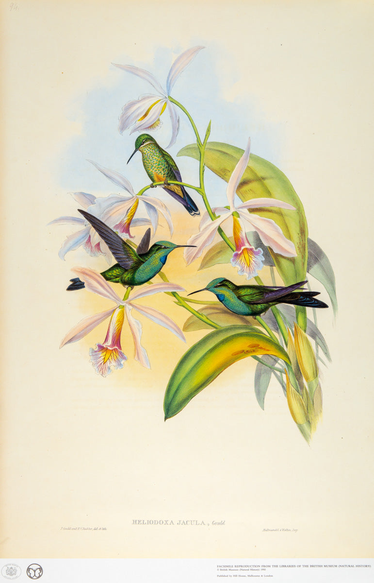 John Gould Print, Green-crowned Brilliant Hummingbird (Plate 94- Hill House Ed.)