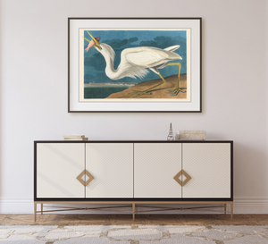 John James Audubon Museum Edition, Great White Heron