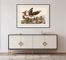 Load image into Gallery viewer, John James Audubon Museum Edition, Virginian Partridge