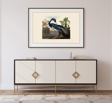 Load image into Gallery viewer, John James Audubon Museum Edition, Louisiana Heron