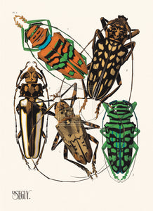 E. A. Séguy Museum Edition, Insectes, Plate 4