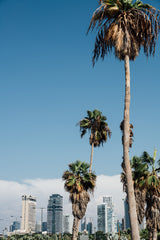 Palm Trees and Skyscrapers