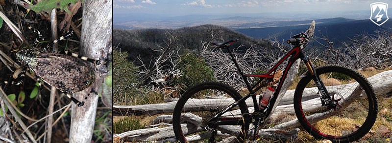 epic-trail-buller-drift-bikes-1
