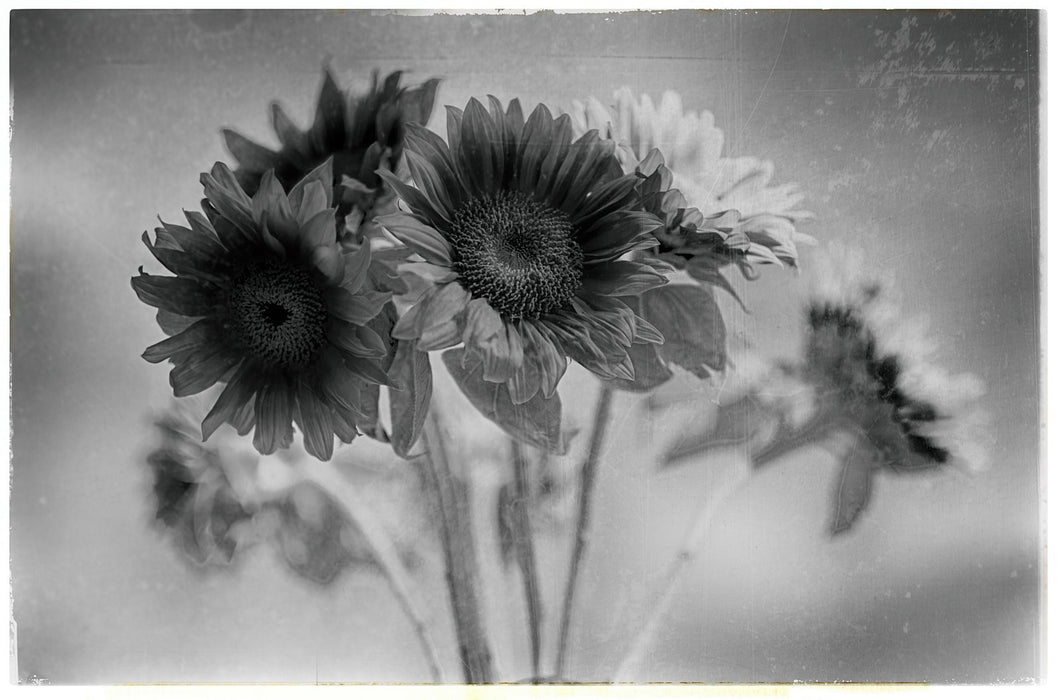 James Norton : Flowers of the Sun (3) - N3CreativeShop