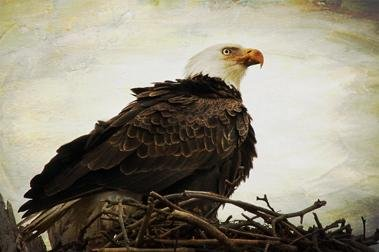 Kat Warren : Eagle Eye - N3CreativeShop