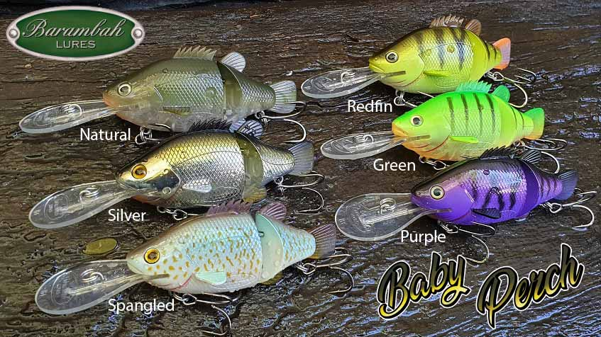 Baby Perch 16+