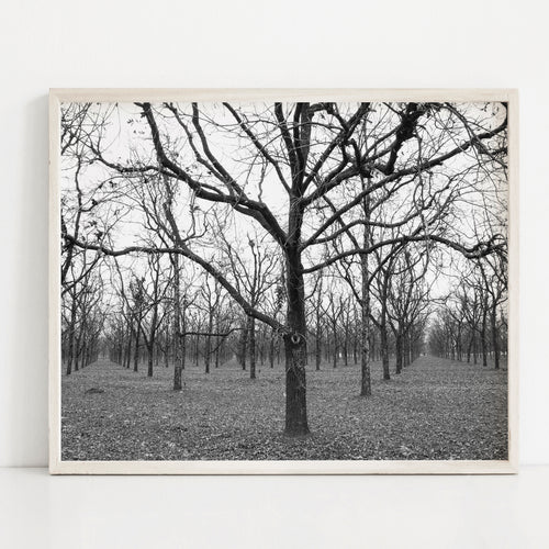 Walnut Grove- Instant Download Wall Art