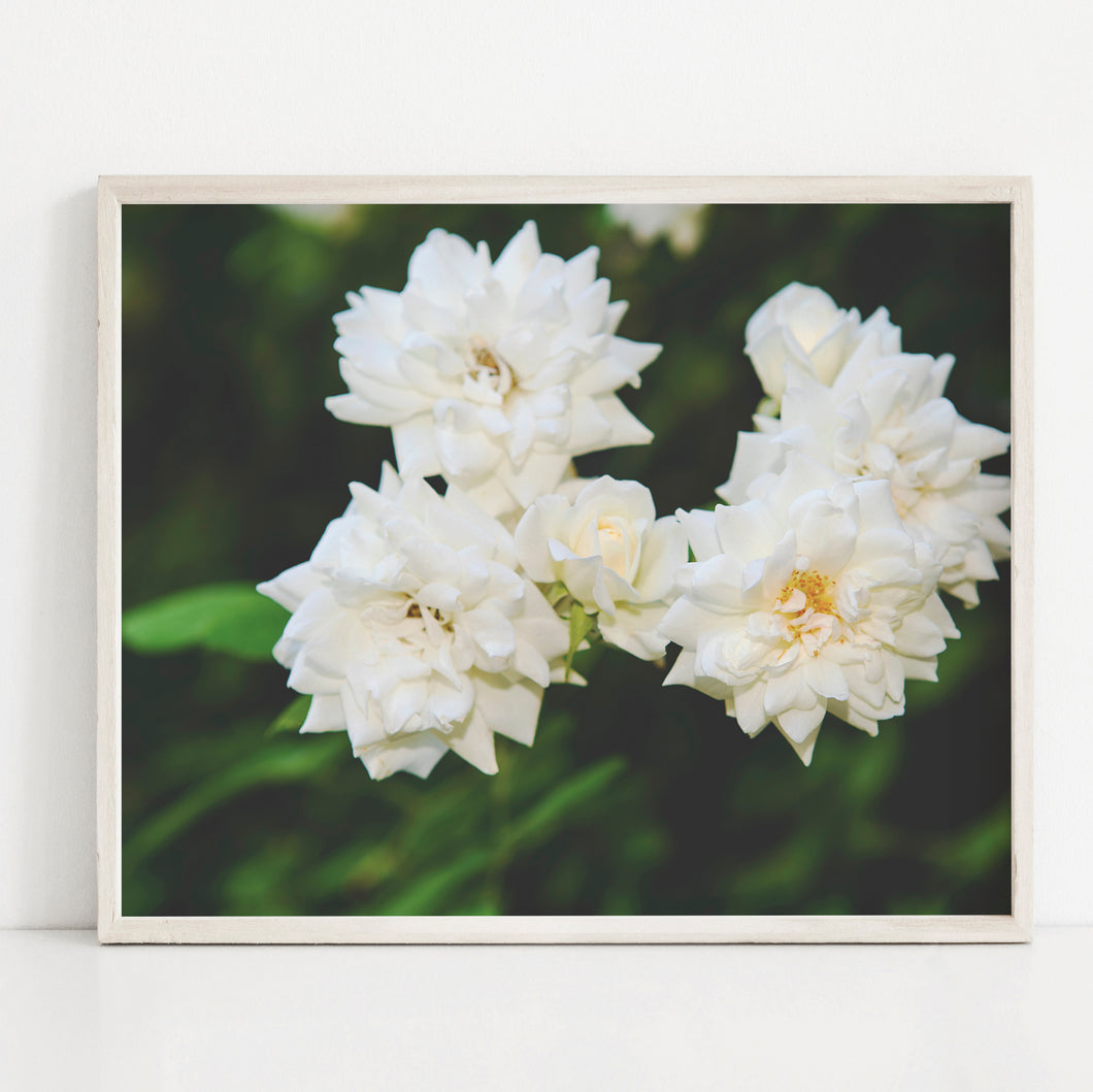 Romantic White Roses- Instant Download Wall Art