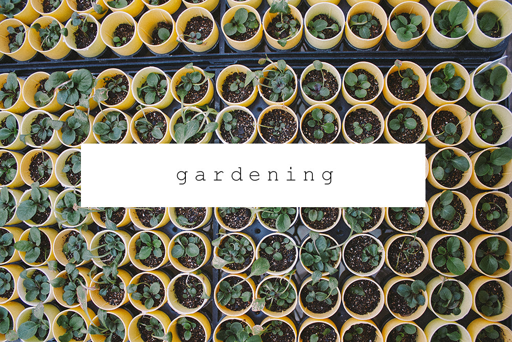 chickpea magazine archives - gardening