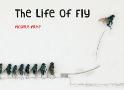 Life of Fly