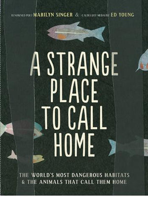 A Strange Place to Call Home - Paperback