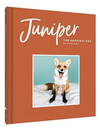 Juniper: The Happiest Fox