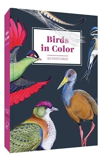 Birds in Color 50 Postcards