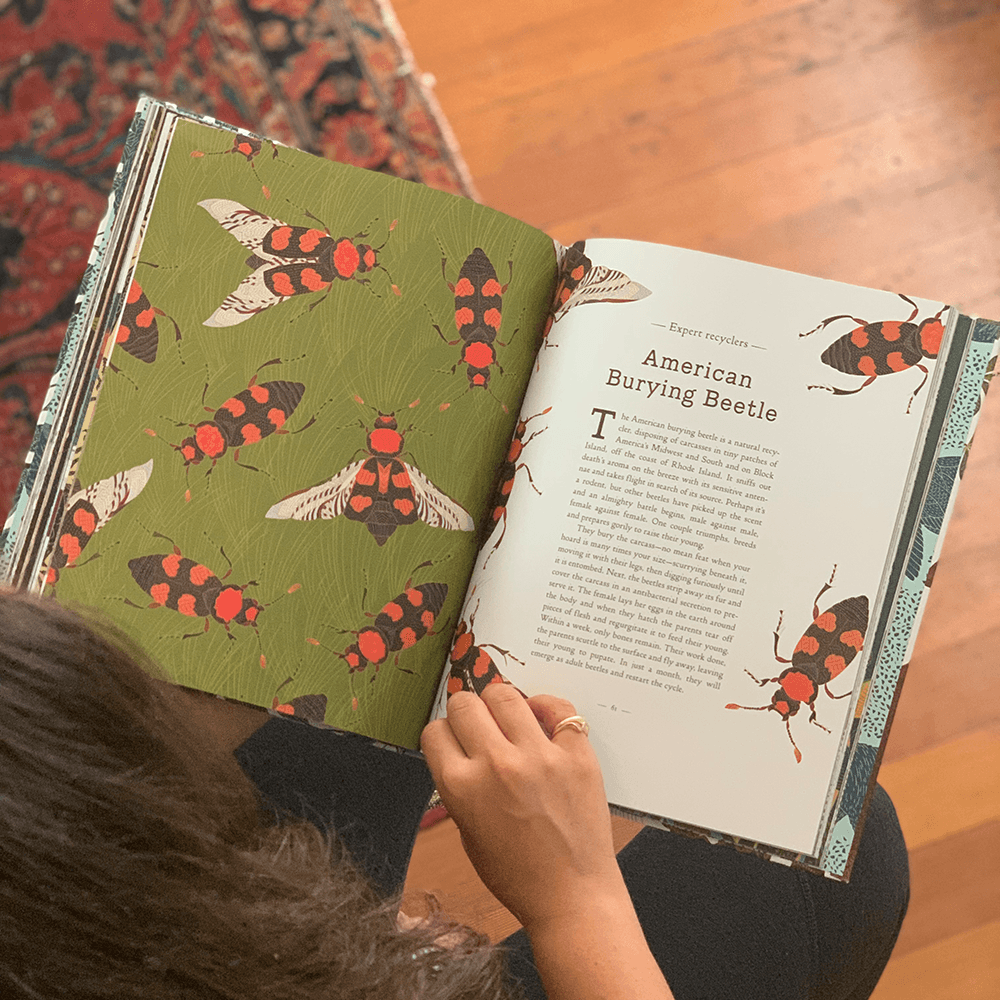 A Wild Child's Guide to Endangered Animals: American Burying Beetle