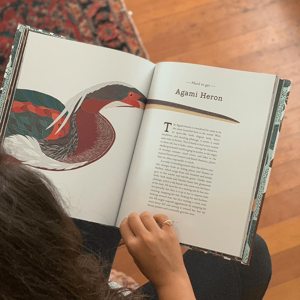 A Wild Child's Guide to Endangered Animals: Agami Heron