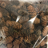 Natural real pinecones 200 pcs bulk