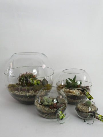 Terrariums in Glass Bowl