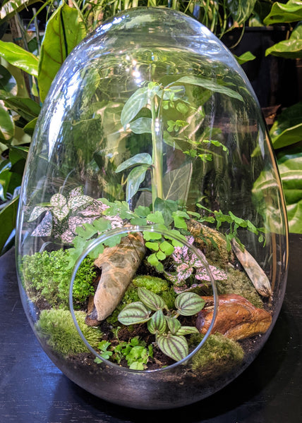 "Tropical Terrarium ~ 7"" wide x 11.5"" tall"