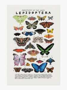 Creatures of the Order Lepidoptera Art Print