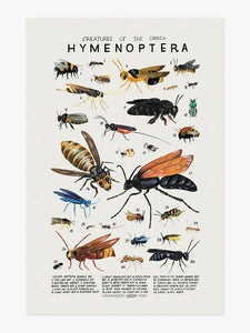 Creatures of the Order Hymenoptera Art Print