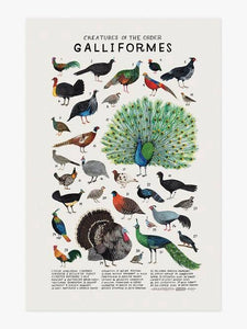 Creatures of the Order Galliformes Art Print