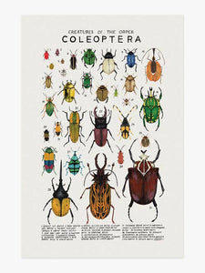 Creatures of the Order Coleoptera Art Print