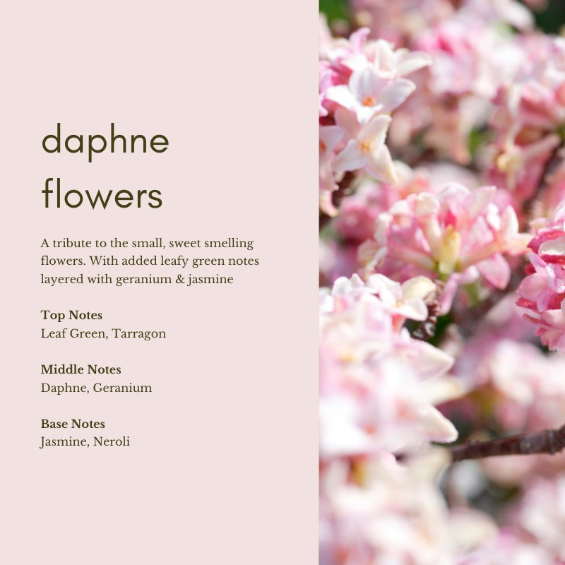 Scent Supply Co: Daphne Flowers (10ml)