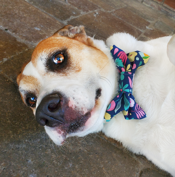 English Garden Dog Bow Tie