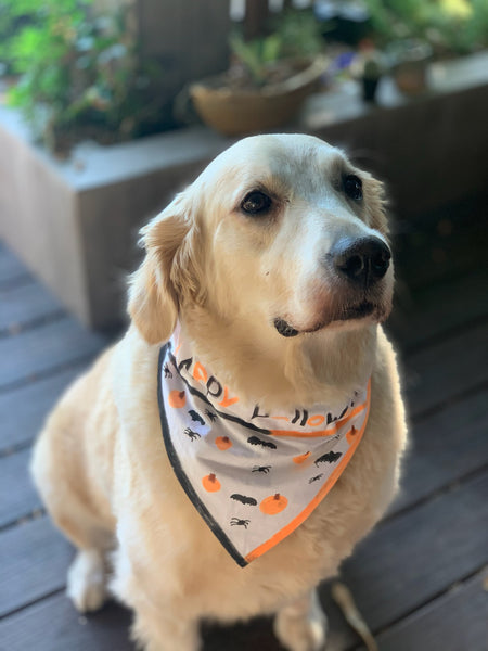 Color Your Own Over the Collar Dog Bandana - Set of 2