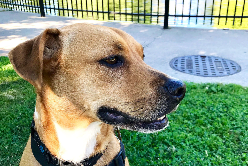 Pup of the Month: Meet Amos