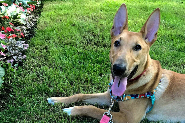 Pup of the Month: Meet Calzone